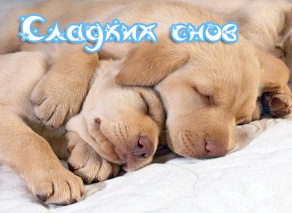 Сладких снов.