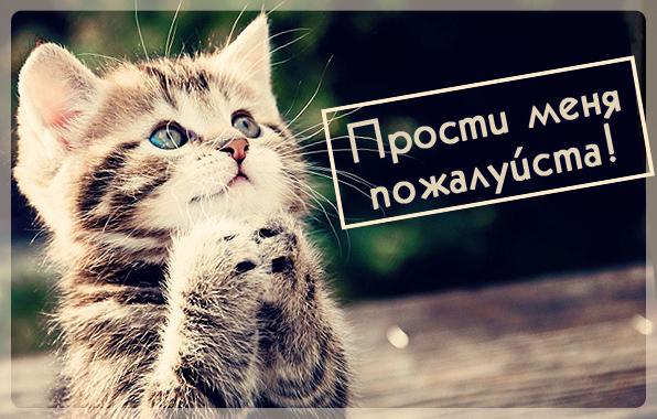Прости меня пожалуйста!.