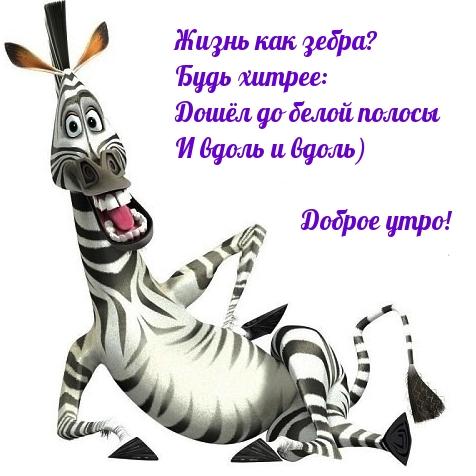 Жизнь как зебра? Будь хитрее: Доброе утро!
