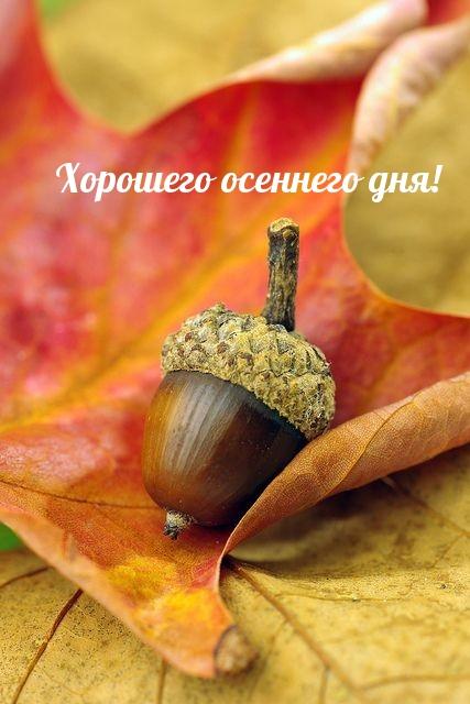 Хорошего осеннего дня!