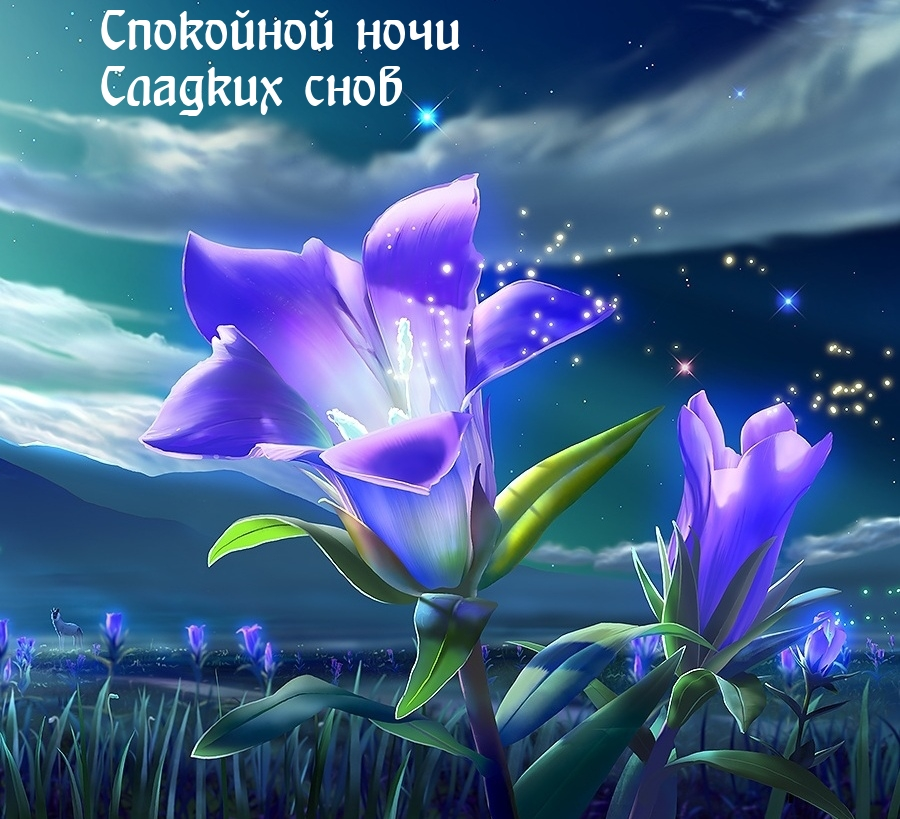 Спокойной ночи Сладких снов.